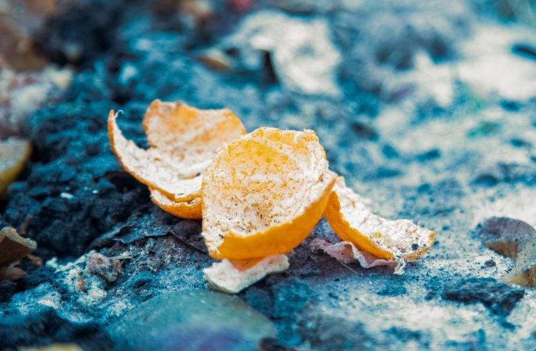 Orange Peels in Compost