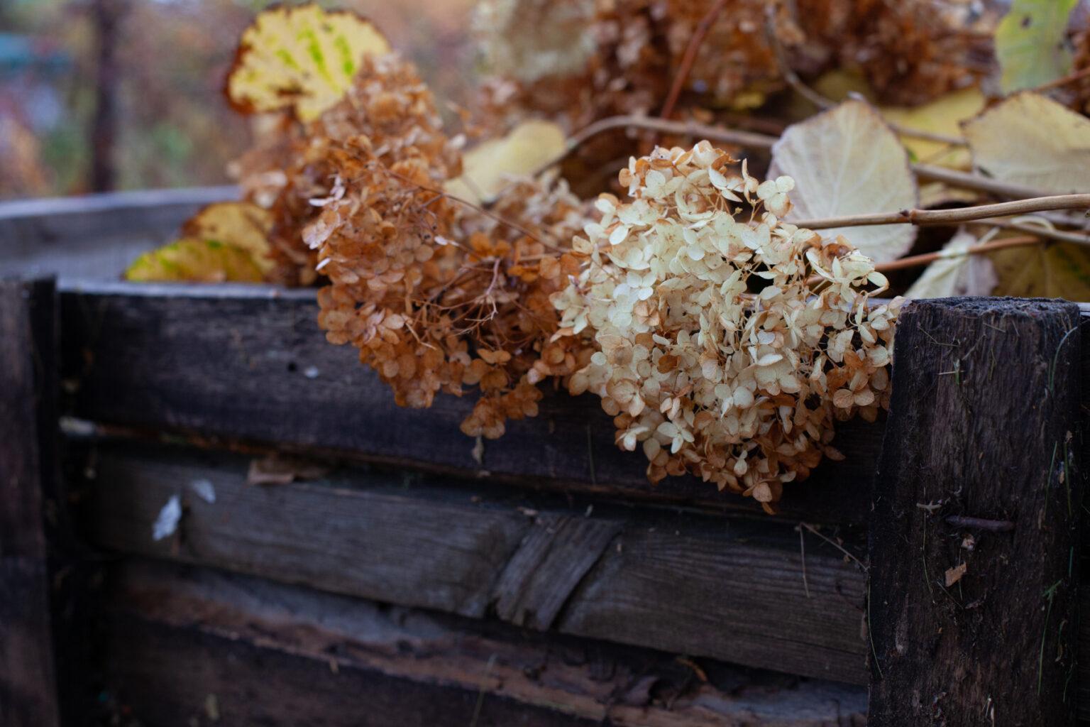 dead flowers in compost bin